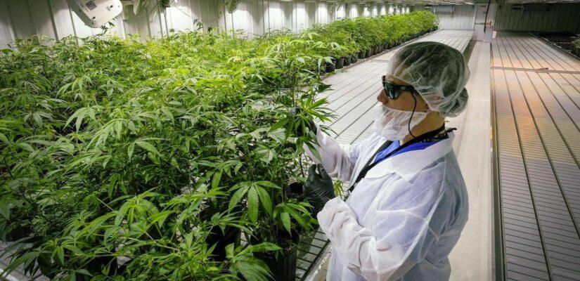 Cannabisjobs