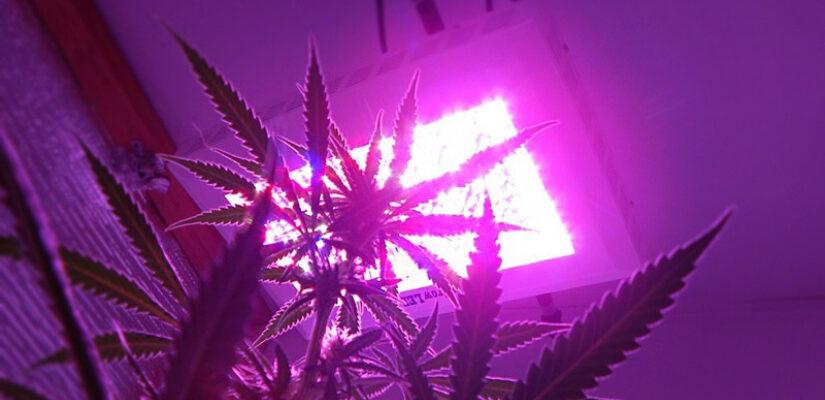 Growlights
