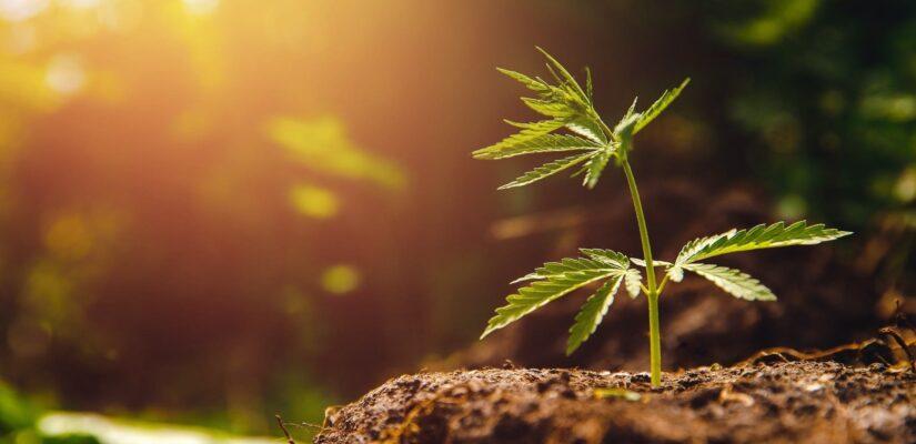 Sustainablecannabis