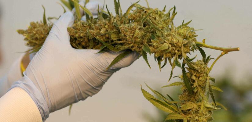 Ukcannabis2020