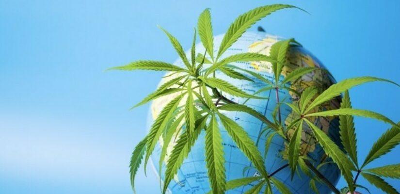 Uncannabis