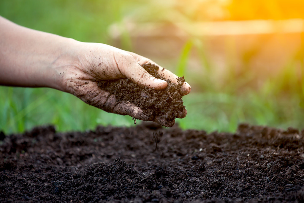 Choosing The Best Soil To Grow Cannabis