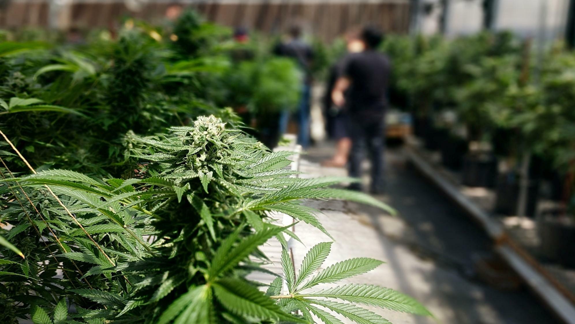 Decriminalisation Vs Legalisation