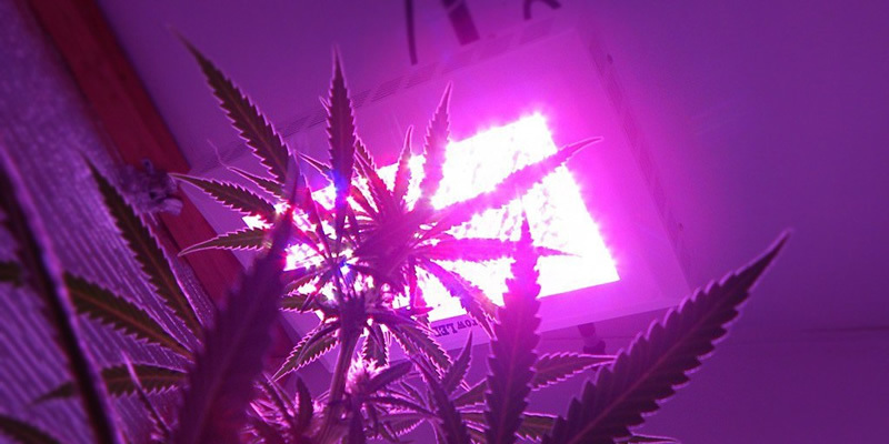 How to Choose the Best Lights for your Grow