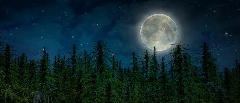 Using The Moon To Grow Cannabis